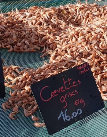 crevettes grises cuites baie de somme